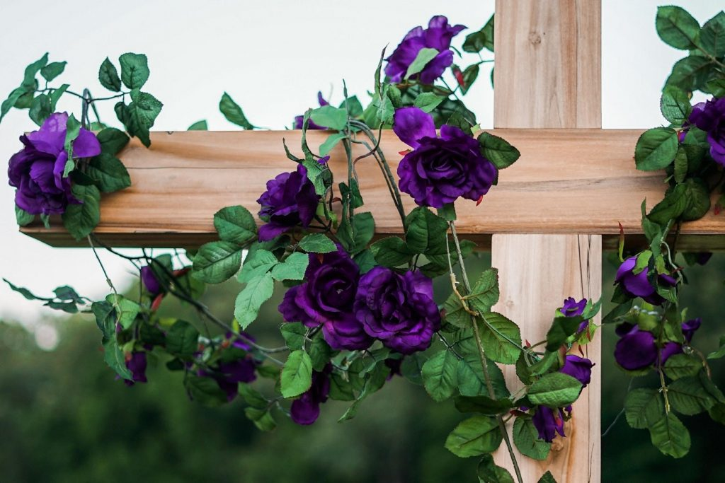 Purple roses growing on a fence - A guide to choosing the right roses for any occasion