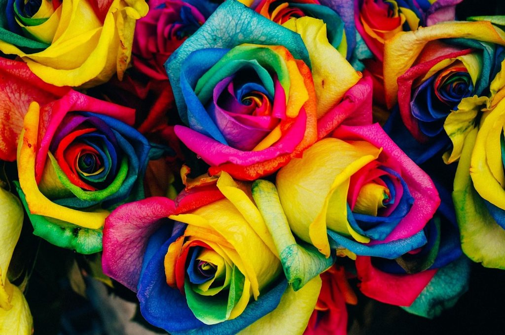 Rainbow roses - A guide to choosing the right roses for any occasion