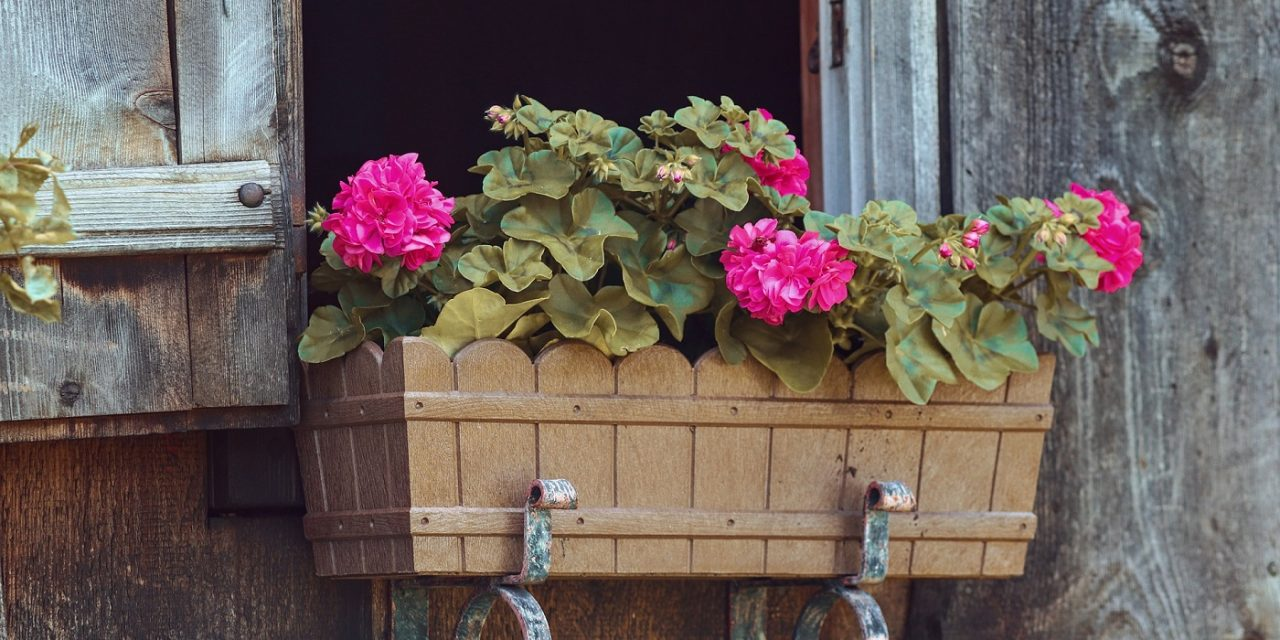 The 6 Best Hanging Flower Boxes for 2019