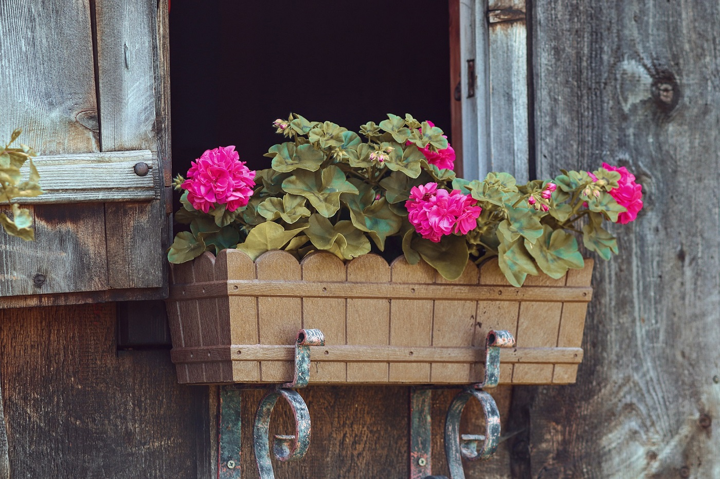 Flower box inn window holding pink carnations. Image from Pixabay.
