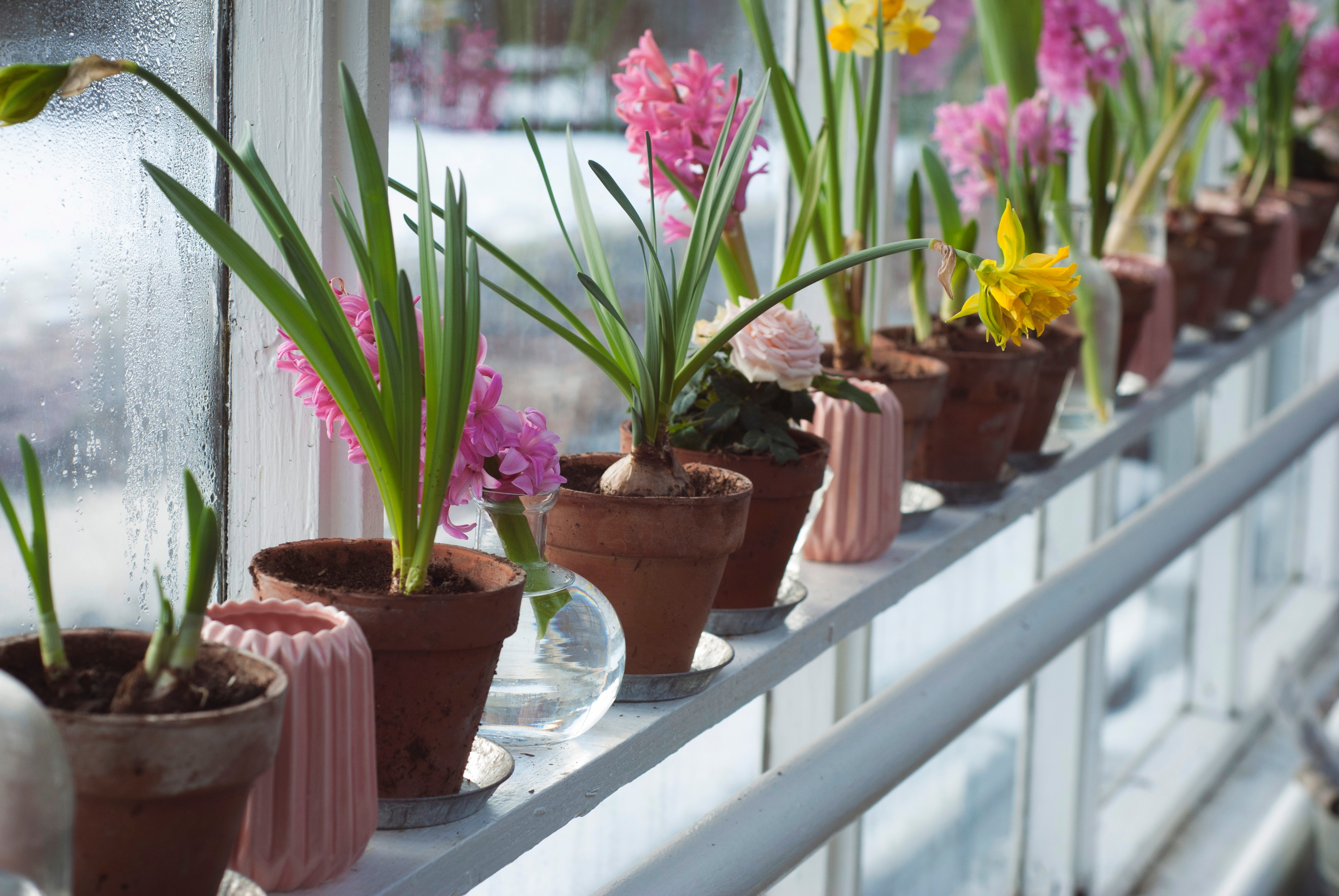 Best Flower Pots Reviews & Buying Guide
